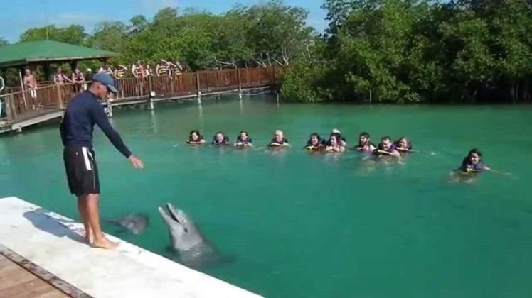 Cayo Guillermo dolphinarium